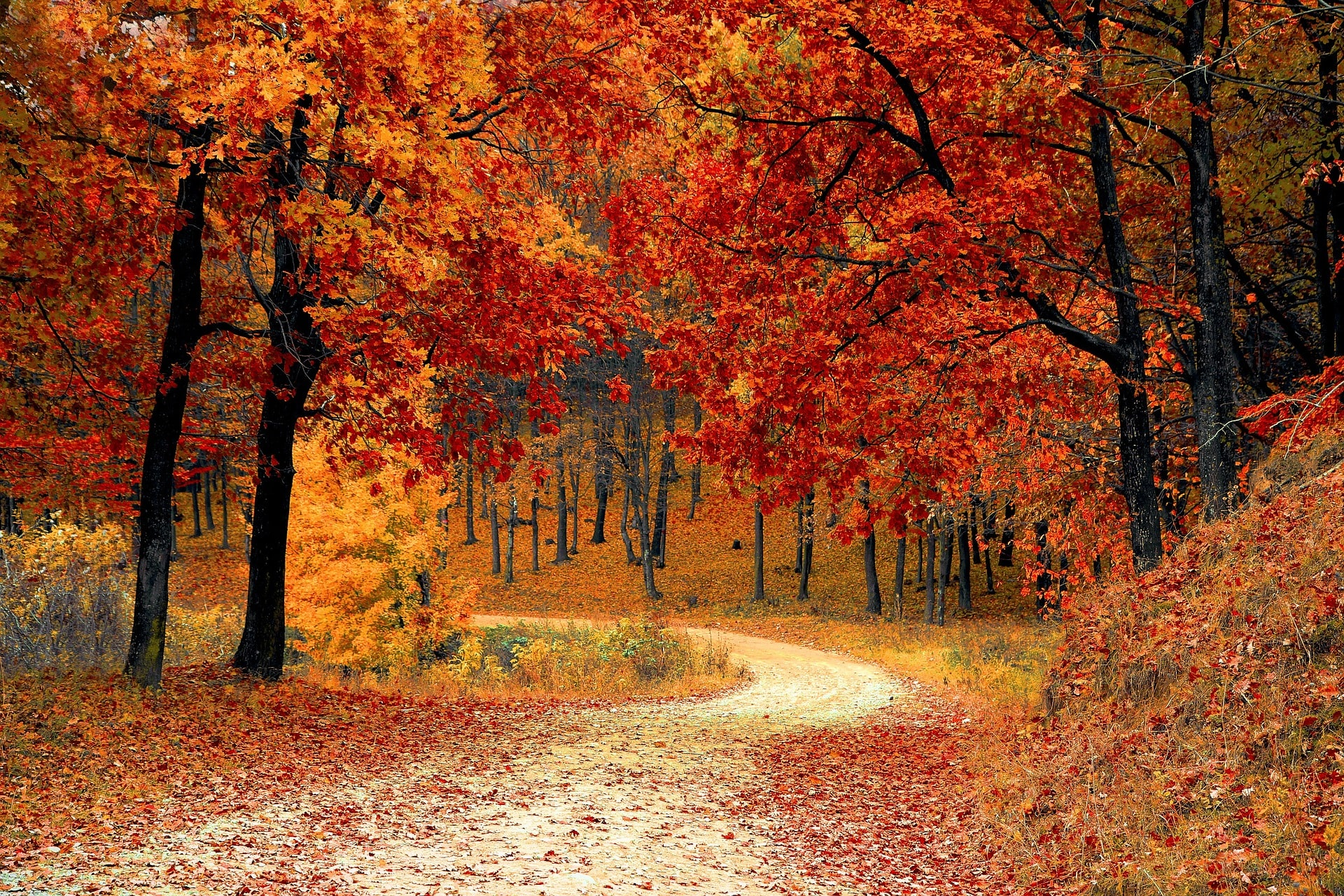 Природа и лес