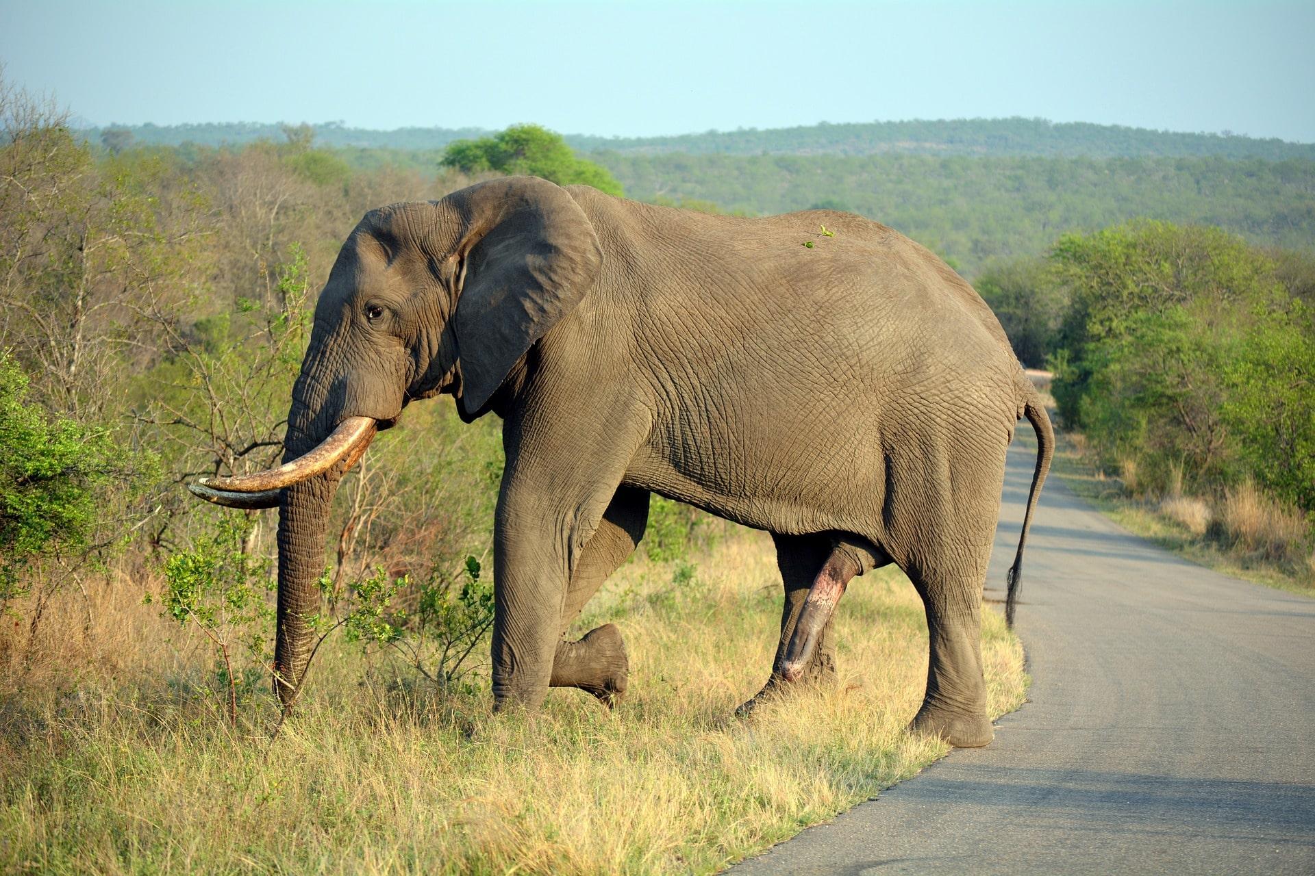 Слон с сюрпризом